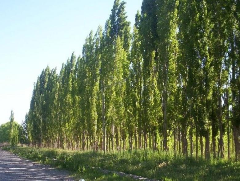 incentivo forestal 01
