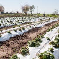 Internos transforman los residuos en escobillones, briquetas, vasos y nutrientes para la huerta